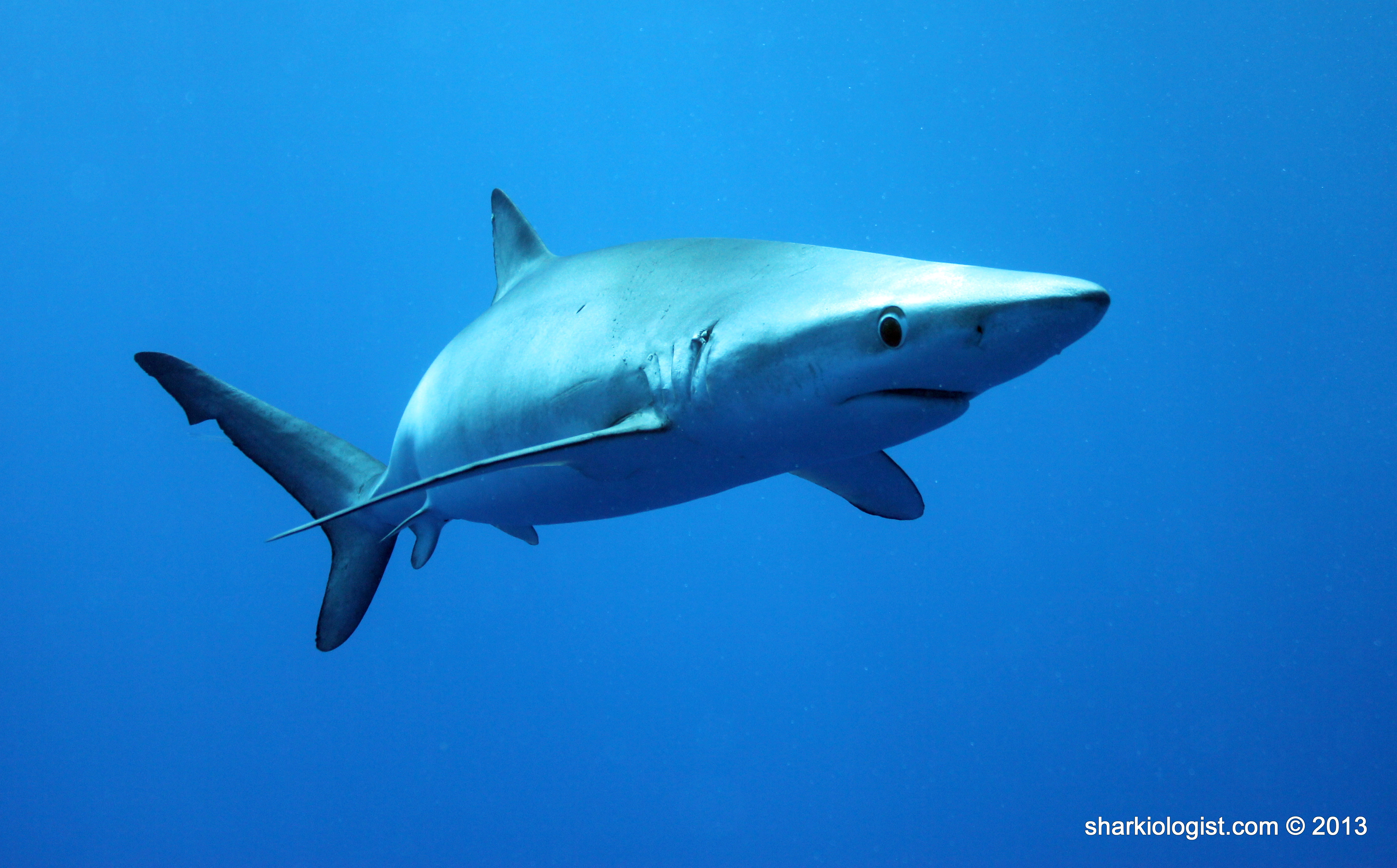 Developing Sharks Skates And Rays Saltwater Life