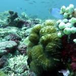 Reef Life, Monad Shoal, Philippines