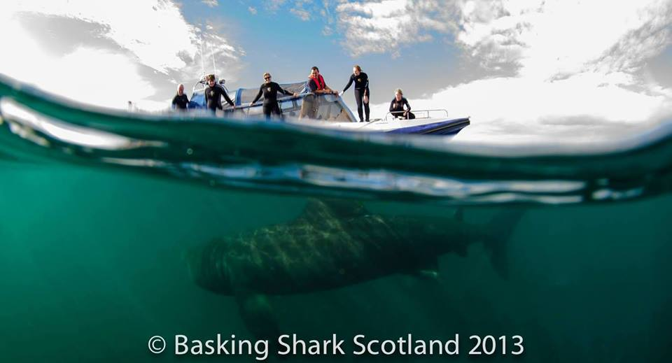 The Ultimate Shark Conservation Experience!